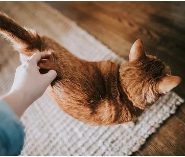 Vet acupuncture service Singapore - Veterinary acupuncture service in Singapore can be used in conjunction with Western medicine. Acupetture provides vet acupuncture service in Singapore for animals.   Visit Here :- https://www.acupetture.com/my-services 	  Contact Us   Email : acupetture@gmail.com  Phone : +65 8930 7097